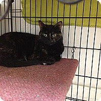 Adopt A Pet :: Kadiesha - Webster, MA