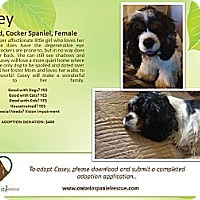 Adopt A Pet :: Casey - Ottawa, ON