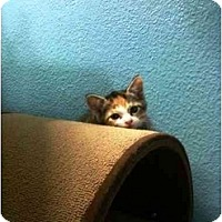 Adopt A Pet :: Callie - Irvine, CA