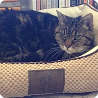 Adopt A Pet :: Zoe - Novato, CA