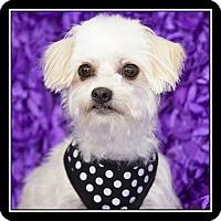 Adopt A Pet :: Reba - San Diego, CA
