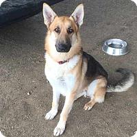 Adopt A Pet :: Zero - Pleasant Grove, CA