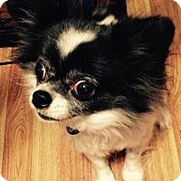 Adopt A Pet :: Curio - San Diego, CA