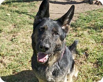 German Shepherd Dog Mix Dog for adoption in Santa Barbara, California - Rosie