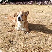 Adopt A Pet :: Bella - Cary, NC