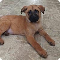 Adopt A Pet :: Abraham - New Oxford, PA
