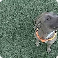 Adopt A Pet :: Rizzo - Wichita Falls, TX