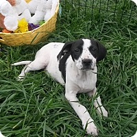 Adopt A Pet :: Dottie - Leming, TX