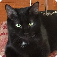 Adopt A Pet :: Dixie - Garland, TX