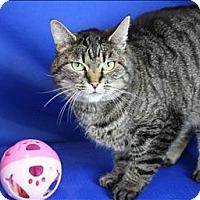 Adopt A Pet :: Frisky - Sherwood, OR