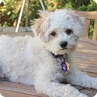 Adopt A Pet :: Jackson D5662 - Fremont, CA