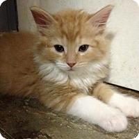 Adopt A Pet :: Phelps - Ephrata, PA