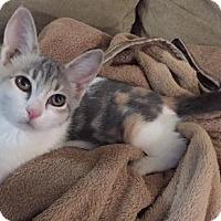 Adopt A Pet :: Gidget - San Jose, CA