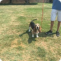 Adopt A Pet :: Dreyfus - Northport, AL