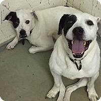Adopt A Pet :: Aston - Chambersburg, PA