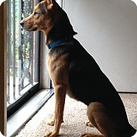Adopt A Pet :: Brinkley - Greeneville, TN