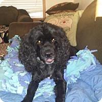 Adopt A Pet :: Pepe Lepeu - Iroquois, IL