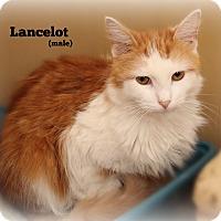 Adopt A Pet :: Lancelot - Glen Mills, PA