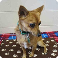 Adopt A Pet :: PALMER - Springfield, MA