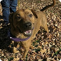 Adopt A Pet :: Zilla - Foster Needed - Detroit, MI