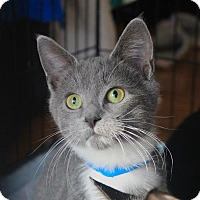 Adopt A Pet :: Baxter - Smithtown, NY