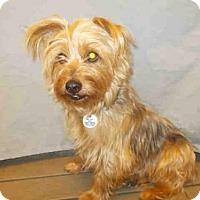 Adopt A Pet :: *DUSTIN - Upper Marlboro, MD
