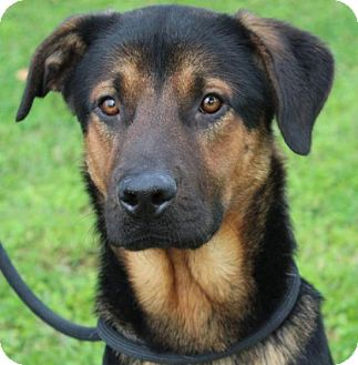 Shepherd (Unknown Type) Mix Dog for adoption in Red Bluff, California - WAFFLE