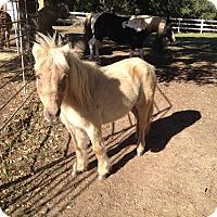 Adopt A Pet :: Carmela - Austin, TX