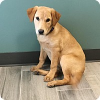 Adopt A Pet :: Rich Coffey - Broomfield, CO