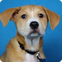 Adopt A Pet :: Seymour - Minneapolis, MN