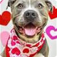 Adopt A Pet :: RUMMY (ECAS Kennel A5) - Pleasanton, CA