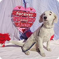 Adopt A Pet :: Justis - West Chicago, IL