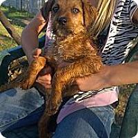 Adopt A Pet :: Bo - Ranger, TX