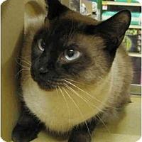 Adopt A Pet :: Meeko - Irvine, CA