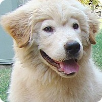 Adopt A Pet :: Reno  * Adopted - Oklahoma City, OK