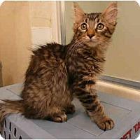 Adopt A Pet :: Templeton - Davis, CA