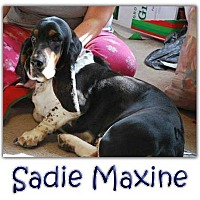 Adopt A Pet :: Sadie Maxine - Marietta, GA