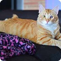 Adopt A Pet :: Cinnamon - Merrifield, VA