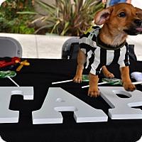 Adopt A Pet :: Hawkeye - San Diego, CA