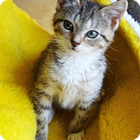 Adopt A Pet :: Mariah - N. Billerica, MA