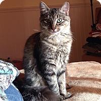 Adopt A Pet :: Forest - Orange, CA