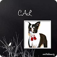 Adopt A Pet :: Cal - Alabaster, AL