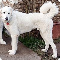 Adopt A Pet :: Teagan - Tulsa, OK