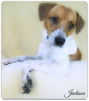Hound (Unknown Type) Mix Dog for adoption in Pascagoula, Mississippi - Jackson