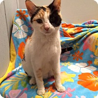 Adopt A Pet :: Carolina - Addison, IL