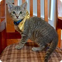 Adopt A Pet :: Marley - Richmond, VA