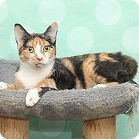 Adopt A Pet :: Nahla - Chippewa Falls, WI