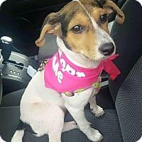 Adopt A Pet :: Gracie - Uxbridge, MA