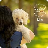 Adopt A Pet :: Max - Friendswood, TX