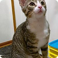 Adopt A Pet :: Dianora - Hillside, IL